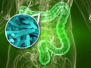 Восстановление микрофлоры кишечника. Препараты и народные средства