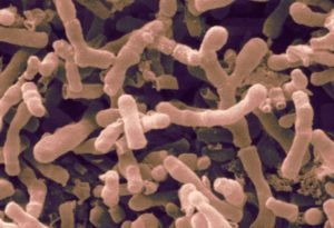 Бифидобактерии и лактобактерии: в чем разница препаратов