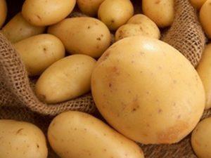 созревший картофель