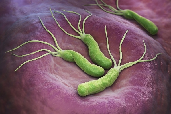 Helicobacter pylori фото бактерий