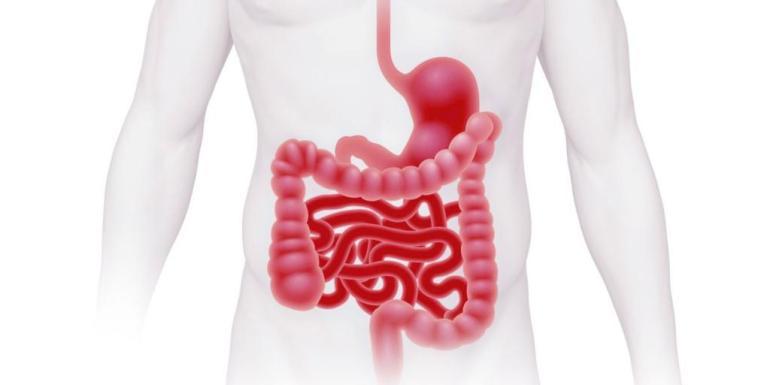 Причины, симптомы и лечение болезней кишечника