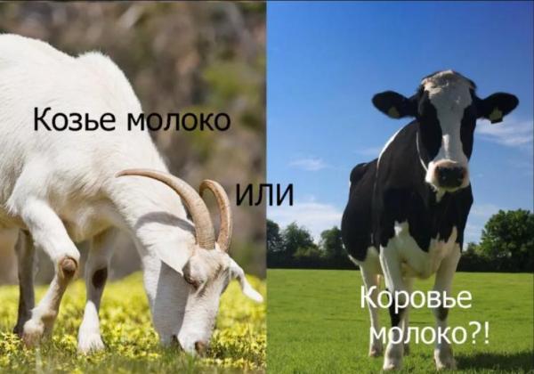 Козье молоко и коровье молоко