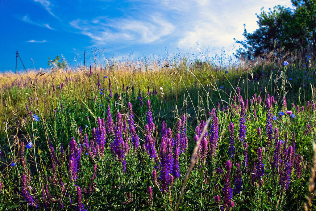 Травы и сборы для лечения желудка - правила применения и рецепты